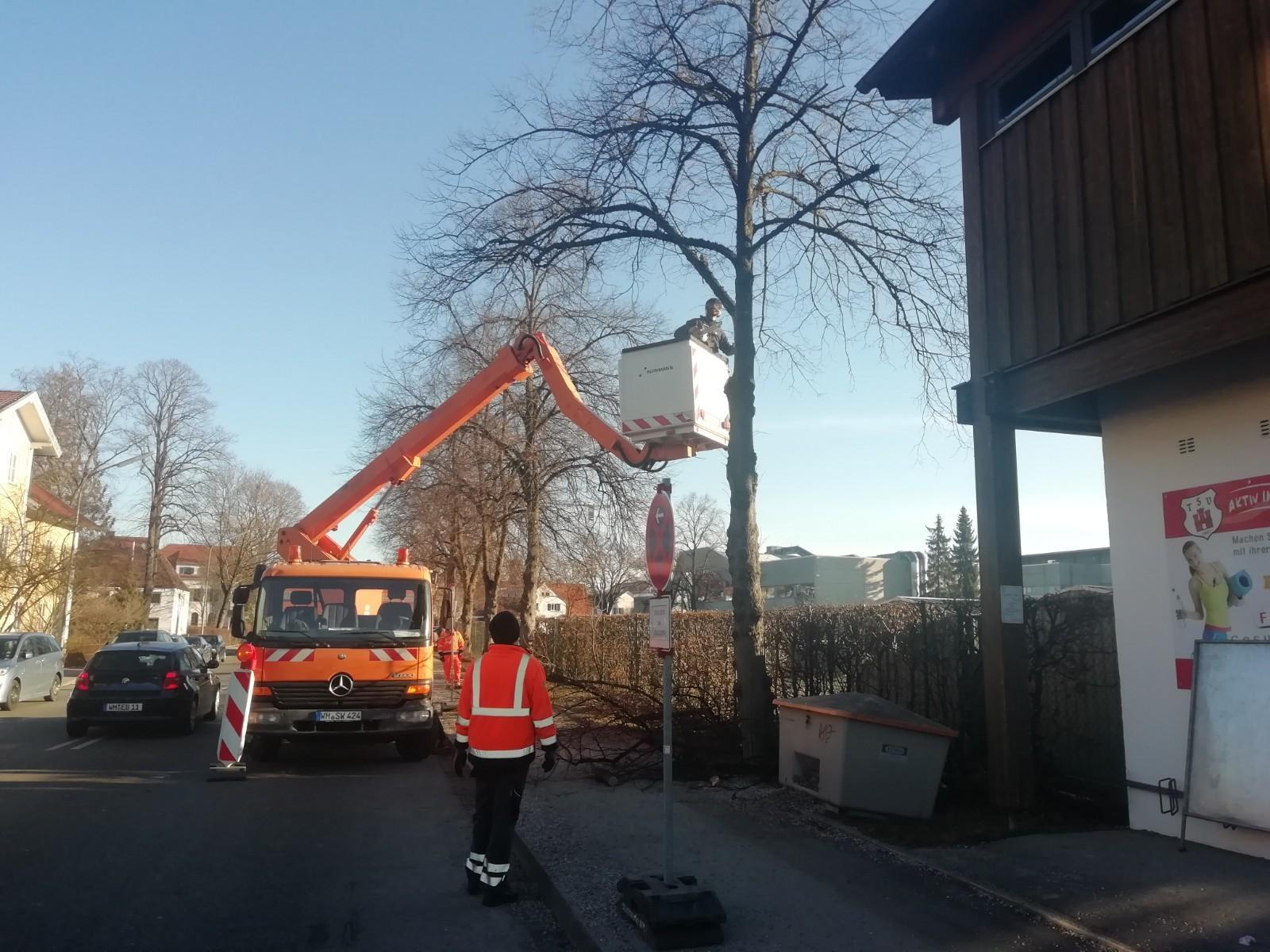 2019_Baumfällaktion (3)
